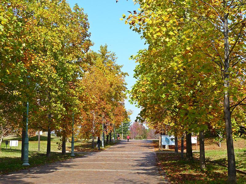 秋色に染まった並木道, the autumn avenue