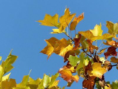 色づいた葉っぱ, autumn leaf